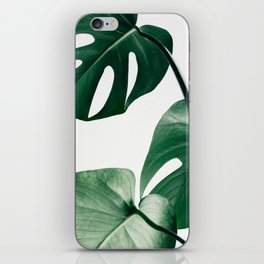 Plant, Green, Monstera, Leaf, Minimal, Trendy decor, Interior, Wall art, Photo iPhone Skin