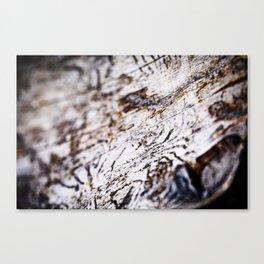 White Birch Wood Bark Natural TexturePattern Canvas Print
