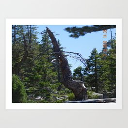 crooked tree, road trip, nature, landscape Art Print