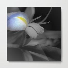 Black and White Iris Metal Print