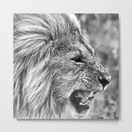Fierce Lion Metal Print