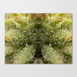 Cannabis Trichome Symmetry Abstract Canvas Print