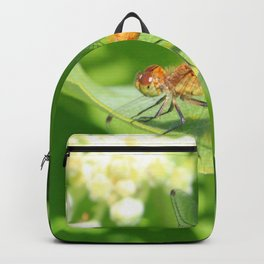 Dragon Fly 4 Backpack