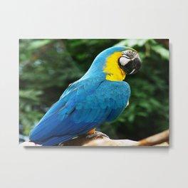 Parrot Trooper Metal Print