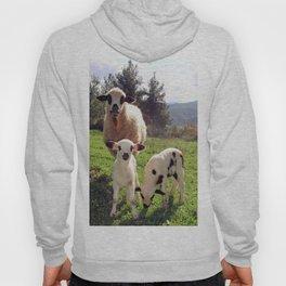 Ewe and Twin Spring Lambs Hoody