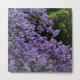 Flowering Jacarada Tree Metal Print