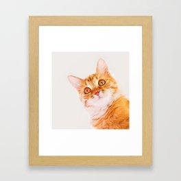 Cute ginger curious cat Framed Art Print