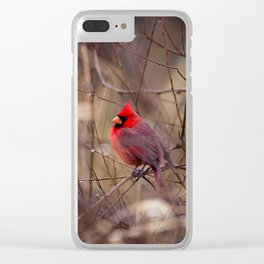 Cardinal - Bright Red Male Bird Rests in Raindrops Clear iPhone Case