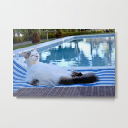 Cat resting on long chair by the pool Metal Print