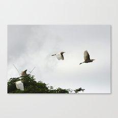 Flight of the egrets Canvas Print