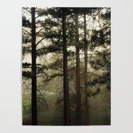 Sunrise Shroud Pine Forest Poster