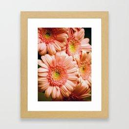 Golden Gerberas Framed Art Print