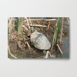 Painted Turtle Among Reeds Metal Print
