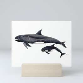 Pygmy killer whale Mini Art Print
