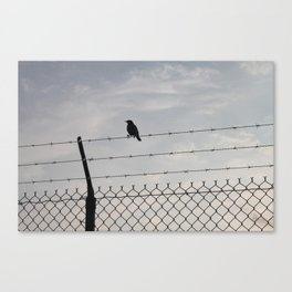 Single Black Bird on a Barbed Wire Fence Canvas Print