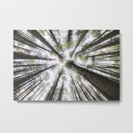 Looking Up - Forest in Laurel Hill Metal Print