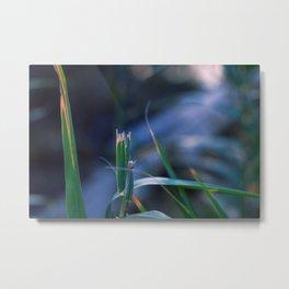 Wildflower IV Metal Print
