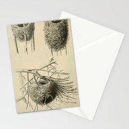 Vintage Illustration - The Nests of Reed Warblers & Kinglets, 1921 Stationery Cards