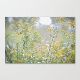 Pastel Fields Canvas Print