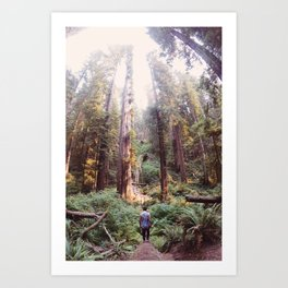 Redwood Dreams Art Print
