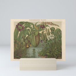 Antique Carnivorous Plants Lithograph Mini Art Print