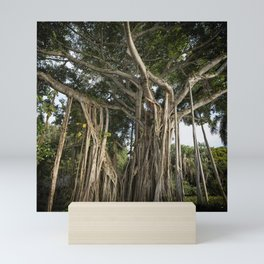 Banyan Tree at Bonnet House Mini Art Print