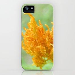 Las Flores de Medellin, Colombia (1) iPhone Case