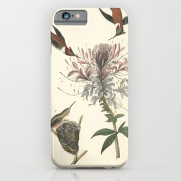 Vintage Print - Birds of America (1840) - Ruffed Grouse iPhone Case