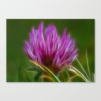clover Canvas Prints featuring Clover by Best Light Images