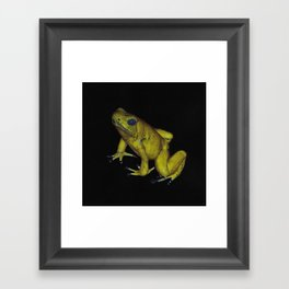 Golden Dart Frog Framed Art Print