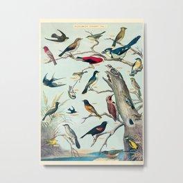 Audubon Birds Vintage Scientific Illustration Encyclopedia Labeled Diagrams Metal Print