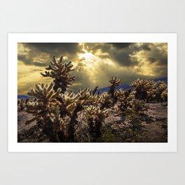 Cholla Cactus Garden bathed in Sunlight in Joshua Tree National Park California Art Print