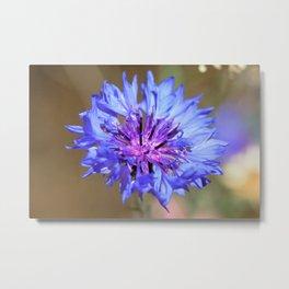 Blue Cornflower by Reay of Light Metal Print