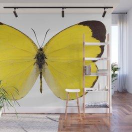 "Butterfly species Eurema alitha ""grass yellow"" Wall Mural"