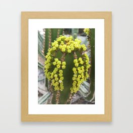 Cactus II Framed Art Print