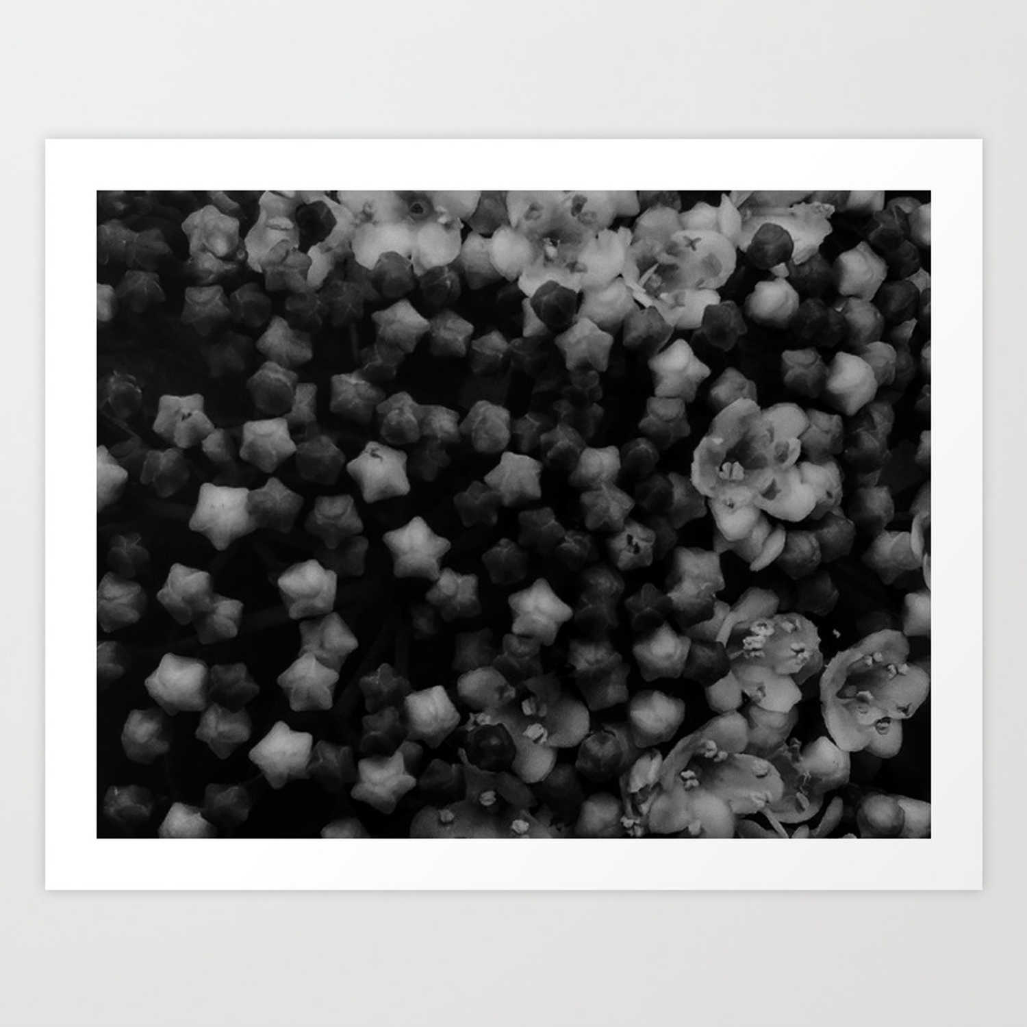 Floral stars black and white high contrast art print