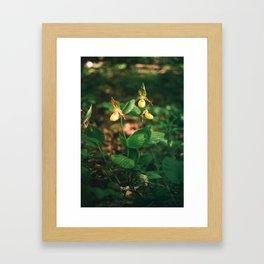 Lady Slippers Framed Art Print