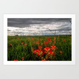 Brighten the Day - Indian Paintbrush Wildflowers in Eastern Oklahoma Art Print