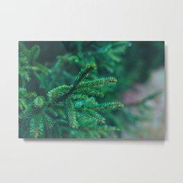 conifer Metal Print