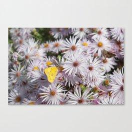 Colorado Wildflower #735 Canvas Print