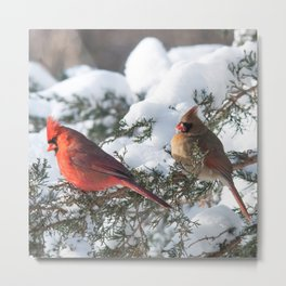 Sunny Winter Cardinals (square) Metal Print