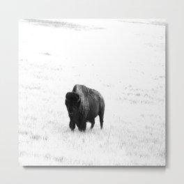 A Bison - Monochrome Metal Print