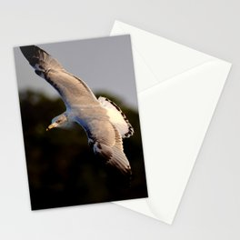 A Seagull Flying at Sunrise on Hilton Head Island Stationery Cards