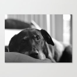 Love Me Canvas Print