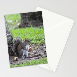 squirrel with coconut Stationery Cards