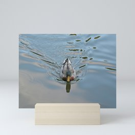 Mallard duck swimming in a turquoise lake 2 Mini Art Print