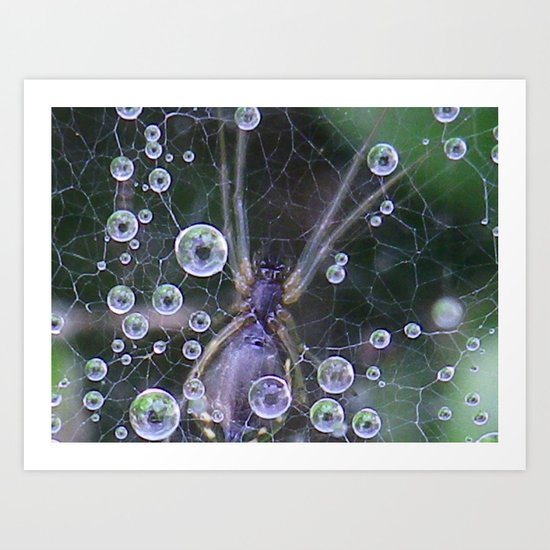 spider and water droplets Art Print