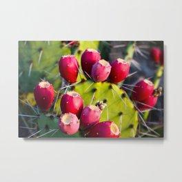 Cactus Pears Metal Print