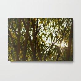 Through the Bamboo Metal Print