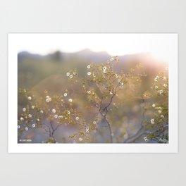 Creosote Stars  Art Print